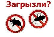 избавим от клопов, тараканов, мышей и т.д,  дезинфекция